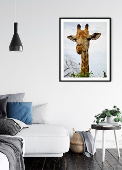 Festive Giraffe