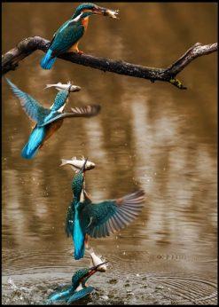 Cinematic Capture Of Bird
