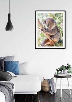 The Iconic Koala