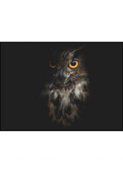 Owl On Black