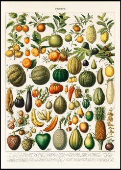 Fruits Vintage