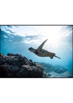 Turquoise Sea Turtle