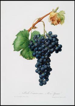 Grape Spanna s