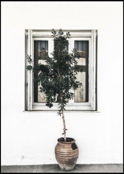 Olive Tree and Window