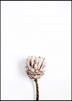 Dried Flower Bud