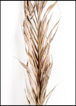 Dried Palm Leaf