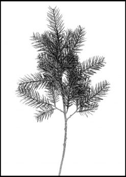 Fir Twig in Black and White