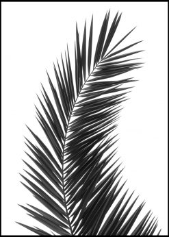 Solitary Palm Leaf in Black and White