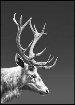 Reindeer by Gabriella Roberg