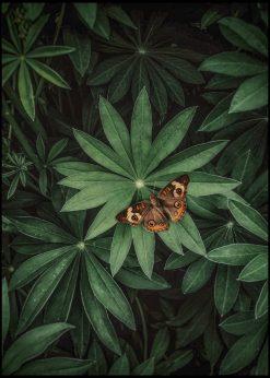 Butterfly by Jenni Tervahauta