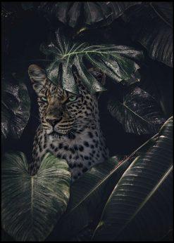 Jaguar by Jenni Tervahauta