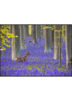 Deer in a Sea of Purple Flowers